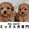 ミックス犬販売【ドッグサーチ】 | オンリーワンの素敵なミックス犬をご紹介していま