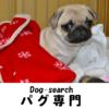 パグ専門【ドッグサーチ】 | 黒パグ・フォーンパグの子犬を紹介しています。