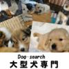 大型犬専門【ドッグサーチ】 | 大型犬を育てるブリーダーの子犬を販売しています。